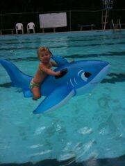 Sharks-R-Fun